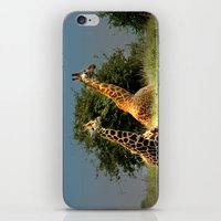 giraffes iPhone & iPod Skins featuring Giraffes by Julie Hoddinott