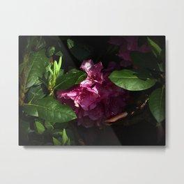 Shy Rhododendron Metal Print