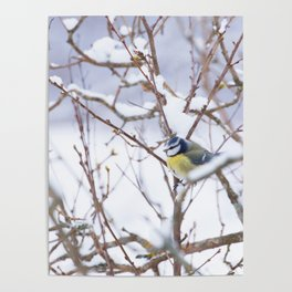 Winter Scene Blue Tit Snowy Branches Natural Background #decor #society6 #buyart Poster
