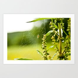 Spider and Web Art Print