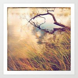 Autumn lake grasses Art Print