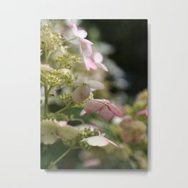 Pink and Green Hydrangea Flower Blossoms with Vintage French Script Metal Print