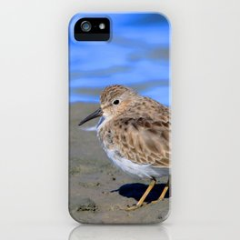 Watercolor Bird, Least Sandpiper 01, Janes Island, Maryland iPhone Case