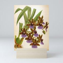Zygopetalum Gautieri Vintage Lindenia Orchid Mini Art Print