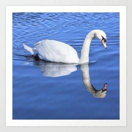 A Swan's Mirror Art Print