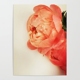 oh my peonies Poster
