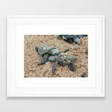 Baby Turtles Framed Art Print