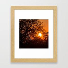Sultry sun setting behind the sausage tree Framed Art Print