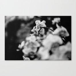 FujiPan Flowers  Canvas Print