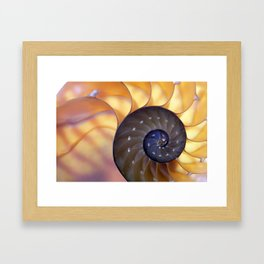 Macro Seashell Framed Art Print