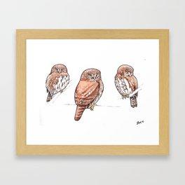 Northern Pygmy-Owl Studies Framed Art Print