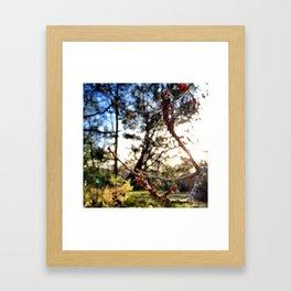 Colourful Web Framed Art Print
