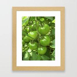 green tomato II Framed Art Print