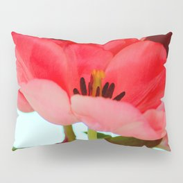 Flat Breed Pillow Sham
