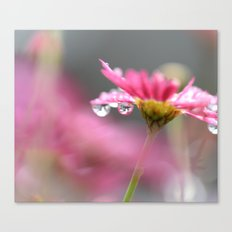 Daisy in the Rain Canvas Print