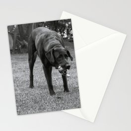 Play Dog Stationery Cards