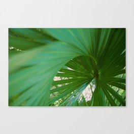 Curvy Fern Jungle Style Canvas Print