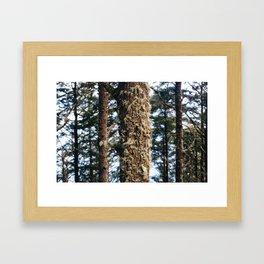 Moss 1 Framed Art Print
