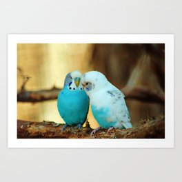 Lovely Pair Of Budgies Art Print