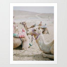 Sassy Camel Friends - Holy Land Fine Art Film Photography Art Print