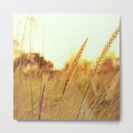 Sunlit Fountain Grass Photograph Metal Print
