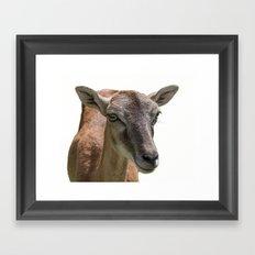 deer on white background Framed Art Print