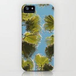 Palm tree Palmera iPhone Case
