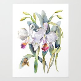 Vintage White Cattleya Orchids and Moth Poster Botanical Design Art Print