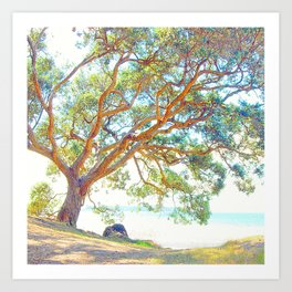 Summer time tree Art Print