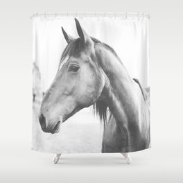 bw horse, equestrian, black and white horse, thoroughbred Shower Curtain
