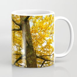 Ginkgo biloba trees Coffee Mug
