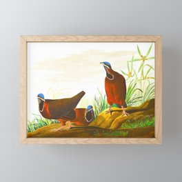Blue-headed Pigeon Framed Mini Art Print