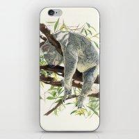 koala iPhone & iPod Skins featuring Koala by Patrizia Donaera ILLUSTRATIONS