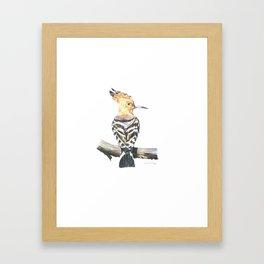 The Eurasian hoopoe (Upupa epops) Framed Art Print
