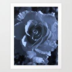 roses XI Art Print