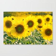 Sunflower Dreams Canvas Print