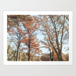 Autumn Colors Art Print