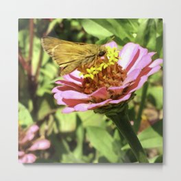 Not A Moth But A Small Skipper Butterfly Metal Print