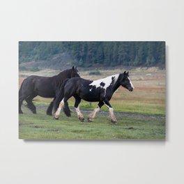 Gypsy Vanner Horses 0096 - Colorado Metal Print