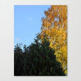 Nature tree yallow green Canvas Print