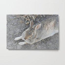 Lazy Hare Metal Print
