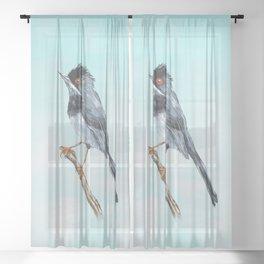 Rüppell's warbler Sheer Curtain