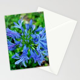 Blue Lily Of The Nile Stationery Cards