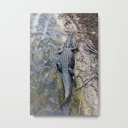 Lurking Metal Print