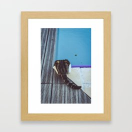 Curiosity does not always kill the cat Framed Art Print