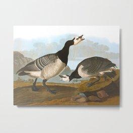 Barnacle Goose Metal Print