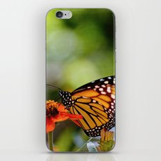 Dreams in Color and Light iPhone & iPod Skin