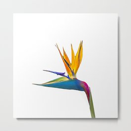 Bird of Paradise Flower (colour pen and ink) Metal Print