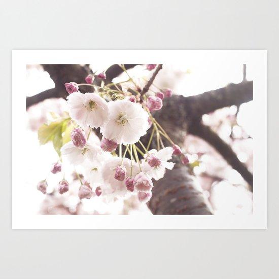 cherry flower tree Art Print