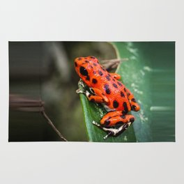 Red Frog Rug